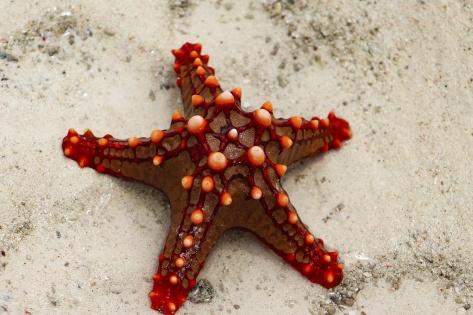 starfish-1464106124E3A